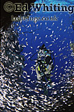 Diver in small cave with glassfish, Southern Red Sea, Sudan