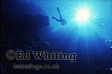 Diver, reef and sun burst, Solo, Southern Red Sea, Sudan