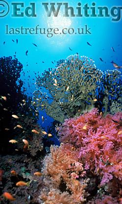 Southern Red Sea, Sudan