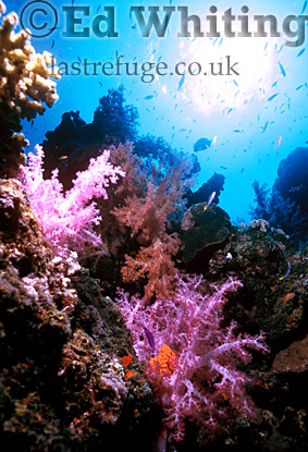 Southern Red Sea, Sudan