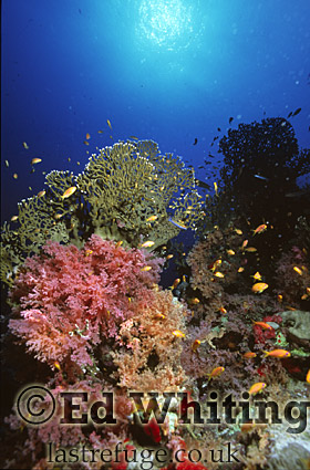 Mixed coral reef with sunburst, Southern Red Sea, Sudan