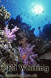 Mix Coral Reef, Southern Red Sea, Sudan
