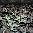 Auschwitz Nazi Death Camp: Part of a huge room filled with shoes of victims which convey the sheer numbers of people murdered