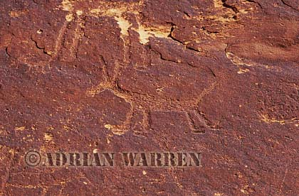 Bighorn Sheep ROCK ART - Petroglyphs, Sand Island Recreation Area, San Juan River, Utah, USA