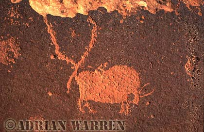 Bighorn Sheep ROCK ART - Petroglyph, Sand Island Recreation Area, San Juan River, Utah, USA