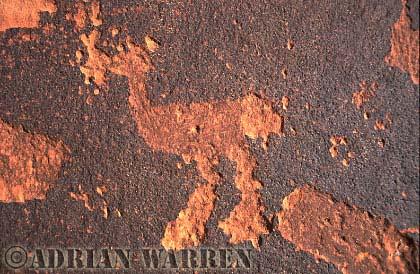Bird ROCK ART - Petroglyph, Sand Island Recreation Area, San Juan River, Utah, USA