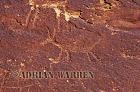 Bighorn Sheep ROCK ART - Petroglyphs, Sand Island Recreation Area, San Juan River, Utah, USA