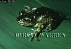 Frog, Camarata, Venezuela
