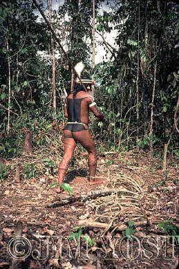 Waorani Indians: In full regalia for a fiesta, a visitor brings a brand new blowgun for a relative, Gabado, 1974, Ecuador