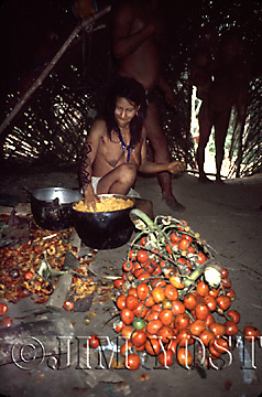 Waorani Indians: During chonta palm season an abundance of food means one aemae fiesta after another, Gabado, 1975, Ecuador