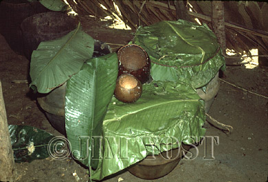 Waorani Indians: Chonta mash sets covered with leaves in pottery to ferment overnight for the aemae, Gabado, 1975, Ecuador