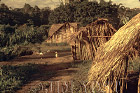 Waorani Indians: Housing styles have varied in Waorani culture since pre-contact times, Tewaeno, 1973, Ecuador
