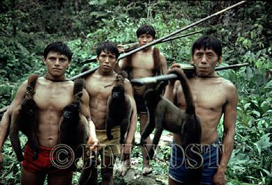 Waorani Indians: Moving into new territory always produces more successful hunts, Kedemeneno, 1980, Ecuador