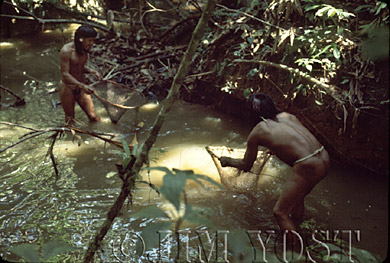 Waorani Indians: After poisoning a stream with barbasco, women use dip nets to collect the stupefied fish, Gabado, 1975, Ecuador