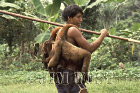 Waorani Indians: Wooley monkeys are the favorite meat for the blowgunners, Kedemeneno, 1978, Ecuador