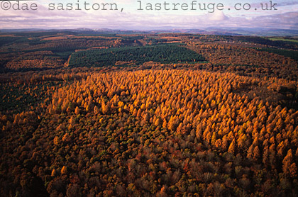Forest of Dean in Autumn, Gloucestershire, England