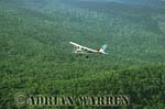 AERIALS: Cessna 206 over forest near Auyantepui, Venezuela