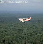 AERIALS: Cessna 206 over forest in Ecuador