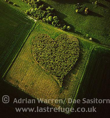 Heart Orchard, near Huish Hill earthwork, Oare, Wiltshire, England