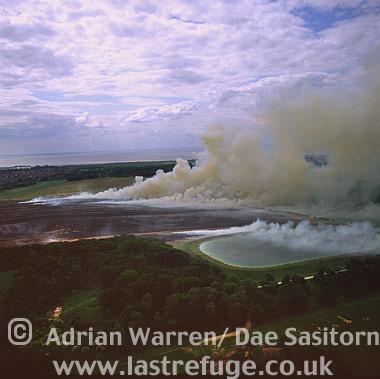 Lavender Fields burning, Heacham, Norfolk, England