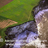 Bempton Cliffs (RSPB Bempton Cliffs) With Northern Gannet Colony (Morus bassanus) , Yorkshire, England
