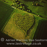 Heart Orchard, near Huish Hill earthwork, Oare, Wiltshire, England