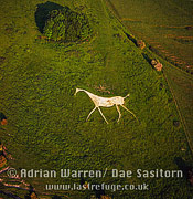 Hackpen (The Hackpen) or Broad Hinton or Winterbourne Bassett White Horse, Wiltshire, England