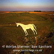 Westbury White Horse and Bratton Camp Hill Fort, Westbury, Wiltshire, England