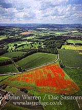 Poppy fields, near Hexham and Corbridge, Northumberland, England