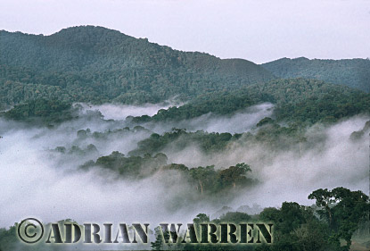 Aerials (aerial image) of Africa : Misty Forest Dawn, Nyungwe Forest, Rwanda, Aerials (aerial image) of Africa, 1993