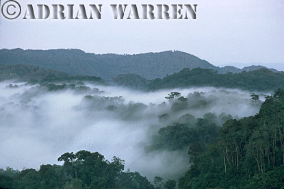 Aerials (aerial image) of Africa : Misty Forest Dawn, Nyungwe Forest, Rwanda, Aerials (aerial image) of Africa, 1994