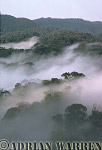 Aerials of Africa : MISTY FOREST DAWN, Nyungwe Forest, Rwanda, Africa, 1990