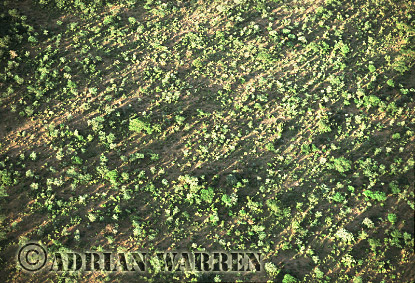 Aerials (aerial image) of Africa : Dry Thorn Scrub, Kenya