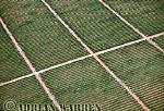 Aerials (aerial image) of Africa : SISAL Plantation, Kenya