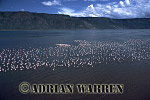 Aerials (aerial image) of Africa : FLAMINGOES over Lake Bogoria, Kenya
