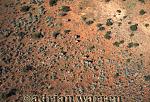 Aerials (aerial image) of Africa : African Elephants (Loxodonta africana) from air, Etosha National Park, Namibia