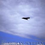 Military Airshow: F-117A Nighthawk (USA Air Force), The Royal International Air Tattoo 2002, Fairford, Gloucestershire, England, UK
