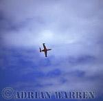 Military Airshow: Fouga CM170 Magister, Fouga flight, Belgian Air Force, Beauvechain, The Royal International Air Tattoo 2002, Fairford, Gloucestershire, England, UK