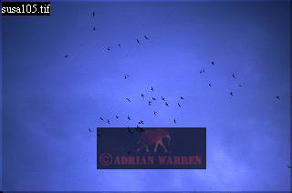 HAWK Migration, Costa Rica
