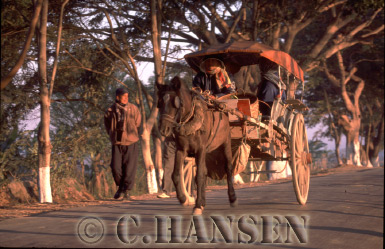 Horse and Cart, Shanstate, Myanmar (formerly Burma)