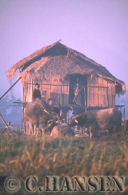 Rural Housing, Inle Lake, Myanmar (formerly Burma)