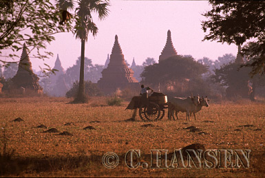 Bull and Cart, Temple landscape, Bagan, Myanmar (formerly Burma)
