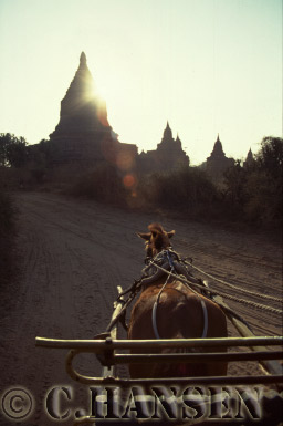 Horse and Cart with Temple in backgrond, Bagan, Myanmar (formerly Burma)