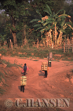 Heading for the market, Southern Laos