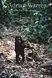 Chimpanzee (Pan troglodytes) : Faustino- male 4 yrs, Gombe Tanzania, 1993