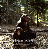 Chimpanzee (Pan troglodytes) : Fifi- and 1 year old -Ferdinand-, Gombe Tanzania, 1993
