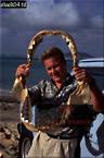 Tiger SHARK Jawbone (Galeocerdo cuvier), Hawaii