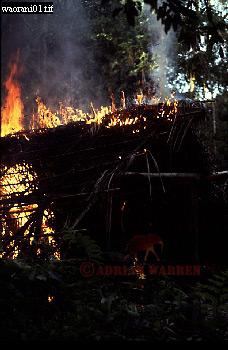 WAORANI INDIANS; Hut Burning before moving on, rio Cononaco, Ecuador, 1983
