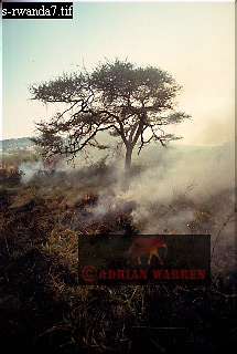 BUSH FIRE, Akagera National Park, Rwanda