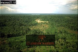 Oil Company Settlement in WAORANI INDIANS Territory, Cononaco Area, Ecuador, 1993